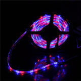 Christmas Decorate Edge Light Flexible LED Rope 3528 LED Strip