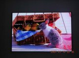 LED Display (P10 Indoor LED Display)