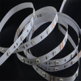 CE RoHS SMD 5050 LED Strip Light with 12/24V