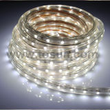 SMD 3528 5050 12V 24V LED Strip Light