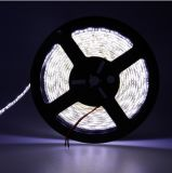 High Quality 5050 Warm White 30LEDs/M 36W LED Strip Cheap Price DV12V Wateproof Strip Light for Clothes