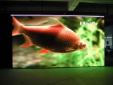 P5 Indoor Full Color LED Display/Full-Color LED Display