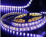 2014 Hot Sale, CE EMC LVD RoHS Two Years Warranty, 5730 60LEDs/M LED Strip Rope Lights